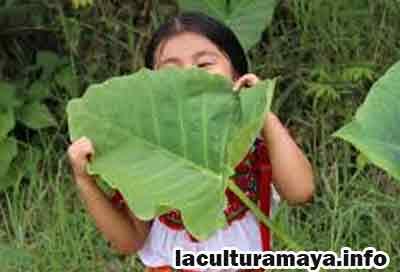 caracteristicas de la poblacion maya