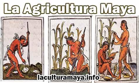 ø La Agricultura Maya Y Sus Tecnicas De Cultivo ø
