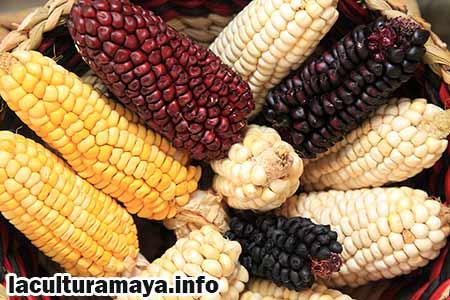 tecnicas de agricultura de los mayas